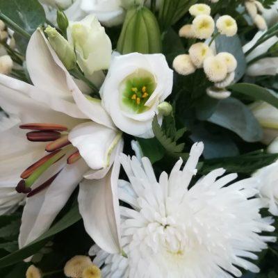 fleurs raquette plenitude