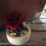 rose preservee