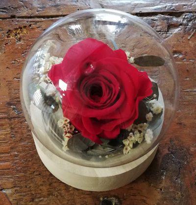 rose madame rouge