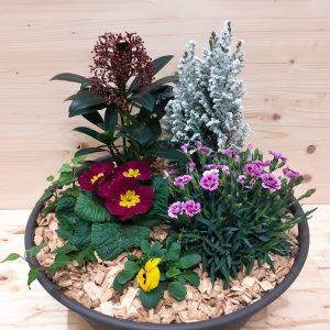 Coupe plante